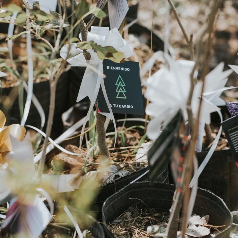 ¿Por qué plantar un árbol nativo?